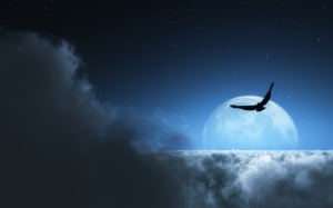 Wallpaper-of-Bird-Flying-Above-the-Clouds-at-Night